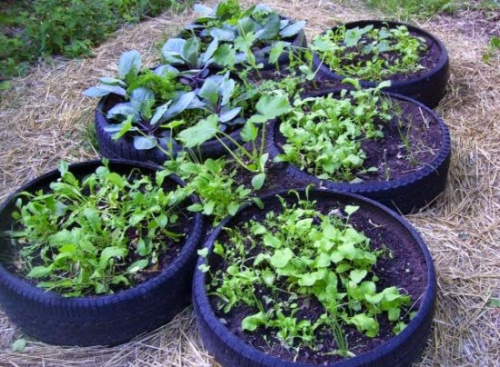 Vegans living off the land recycled car truck tire gardens for How to make a tire garden