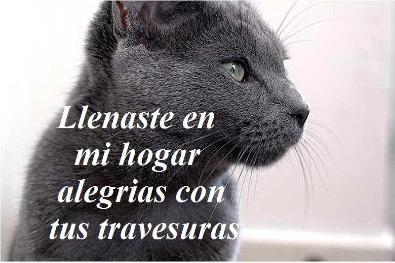 Imagenes Lindas Para Compartir Fb: Frases Bonitas Para Mi Gato Muy ...