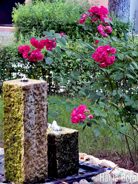 fantana si flori roz gradina hotel florica