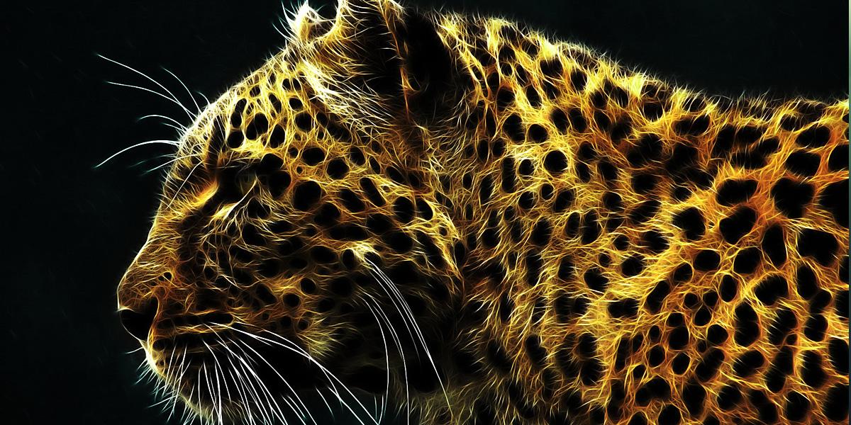 Leopards 300+ Muhteşem HD Twitter Kapak Fotoğrafları