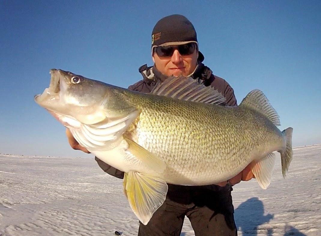 Outright angling my lake winnipeg greenback get away for Lake winnipeg fishing report