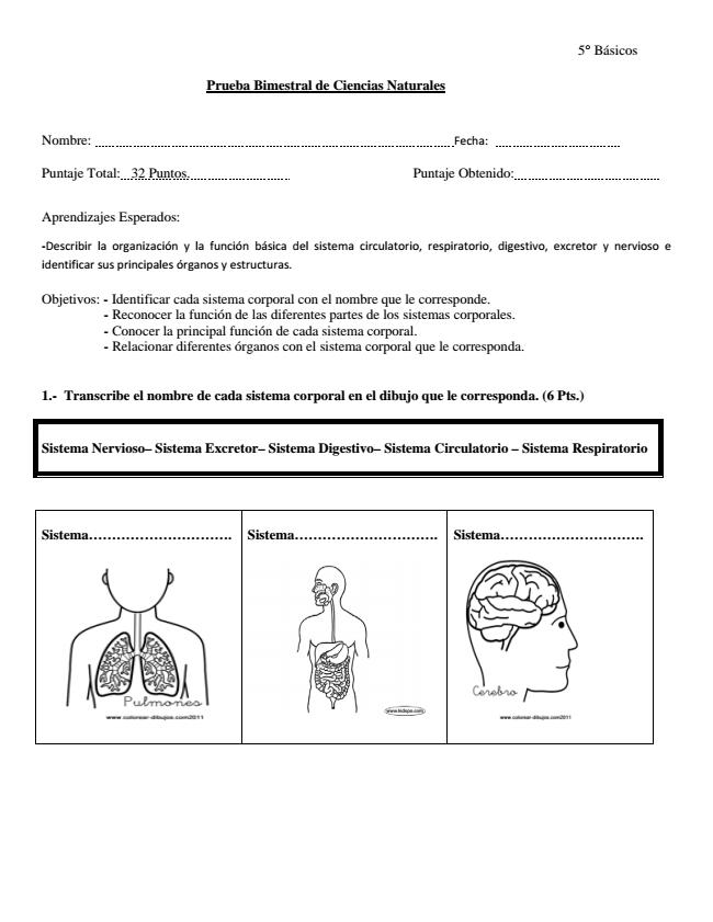 Prueba Sistemas Corporales 5° Básico ~ Recurso para Profesores