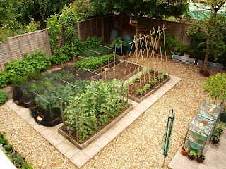 neat veg garden with raised beds