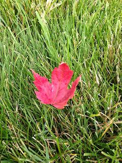 A Leaf has Fallen