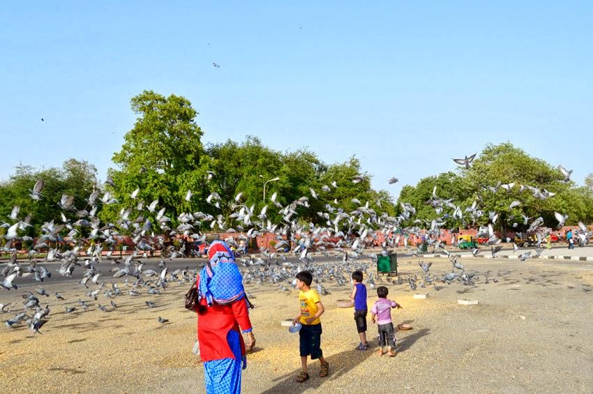 Pigeons flew children