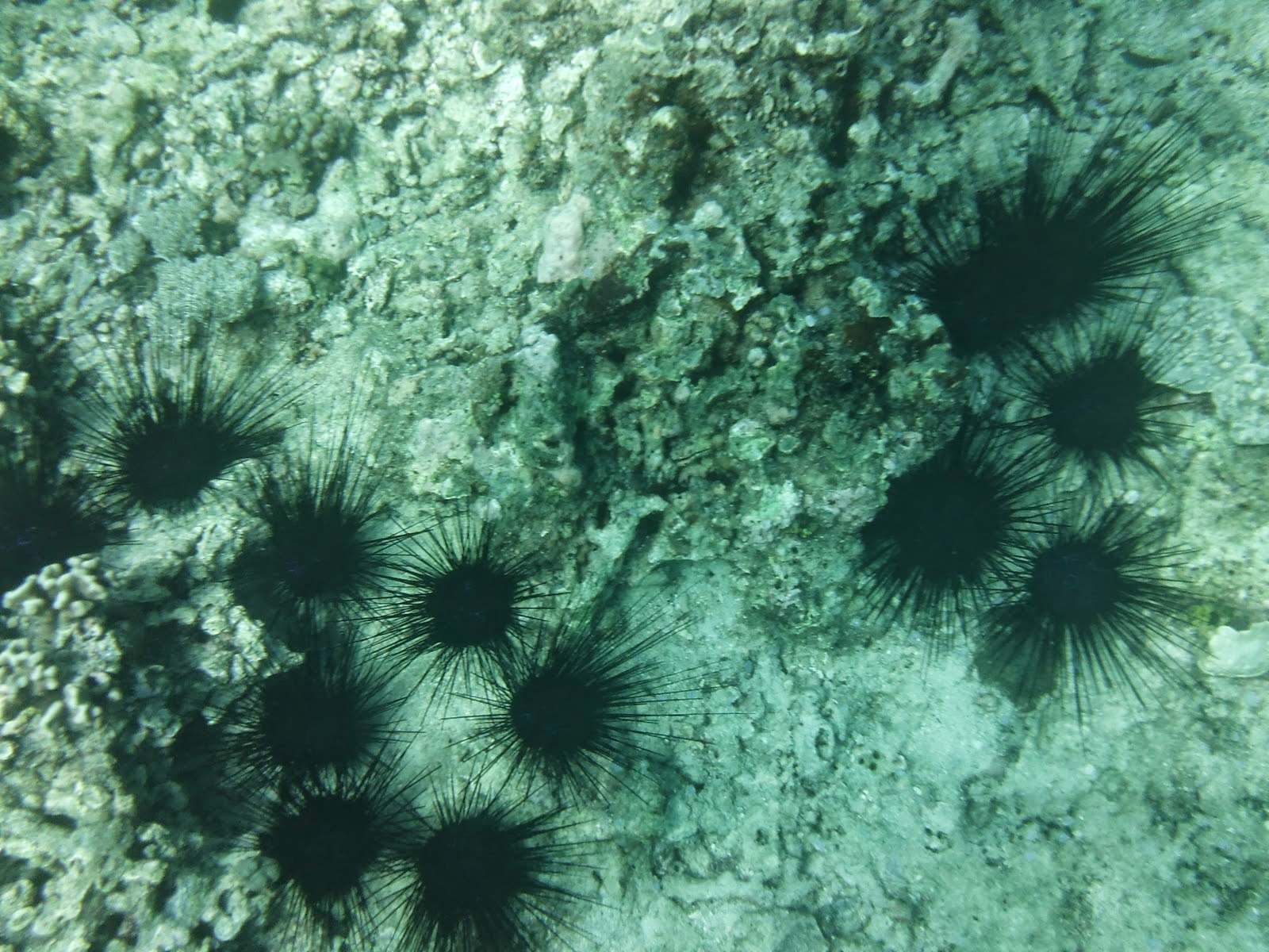 affordable boracay packages_2 sea urchins