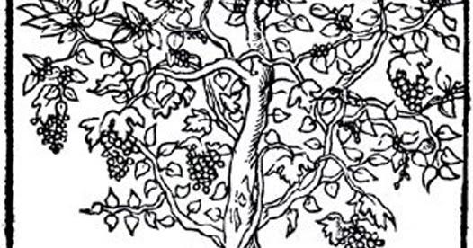 Les vin des papes d 39 avignon la culture de la vigne au temps des pontifes d 39 avignon - Quand tailler la vigne en treille ...