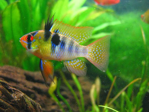 Finatics Tropical Fish Highlights From Todays Fish Order