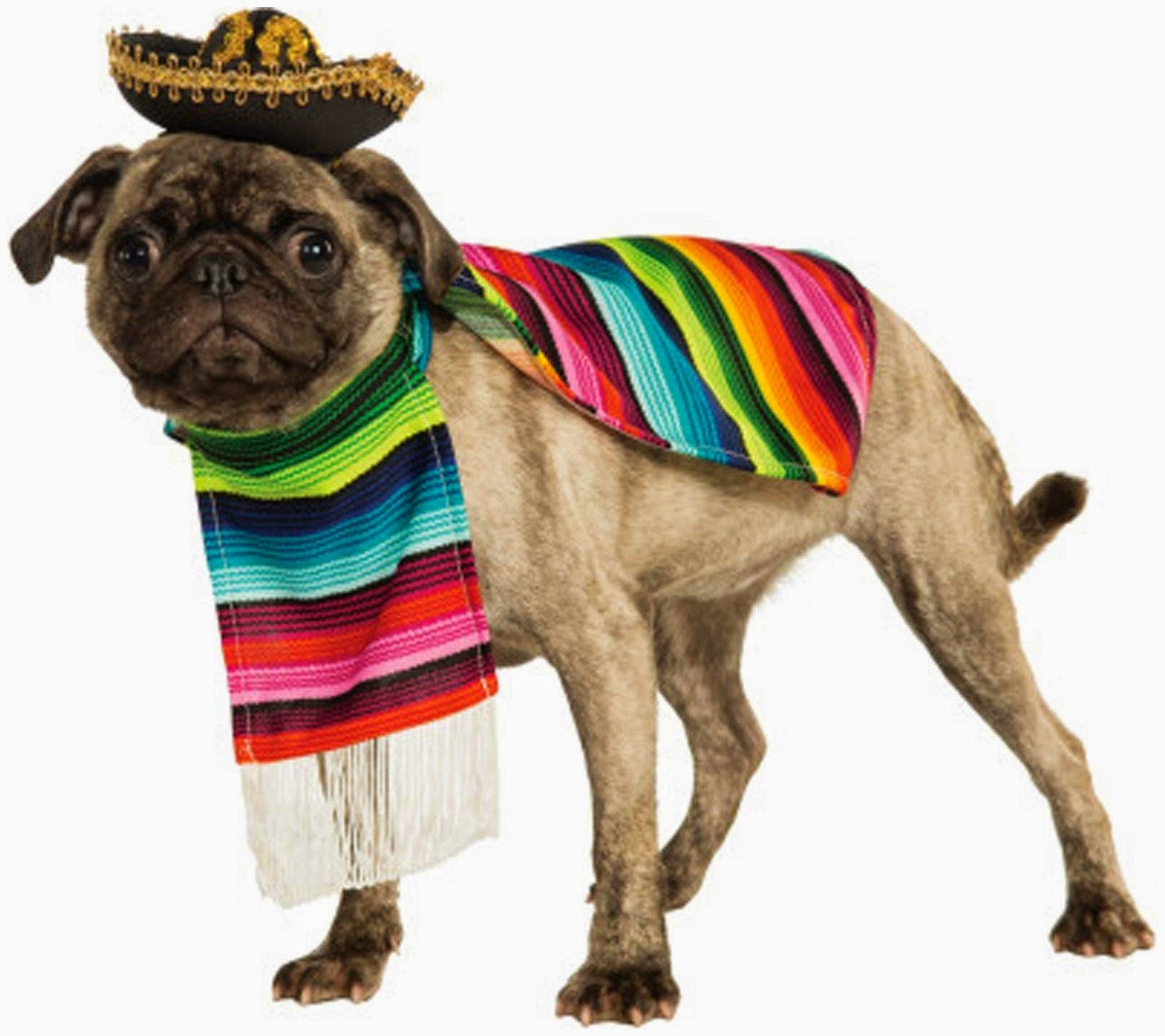 Dress up your pet day - Mexican Poncho And Sombrero Pet Costume
