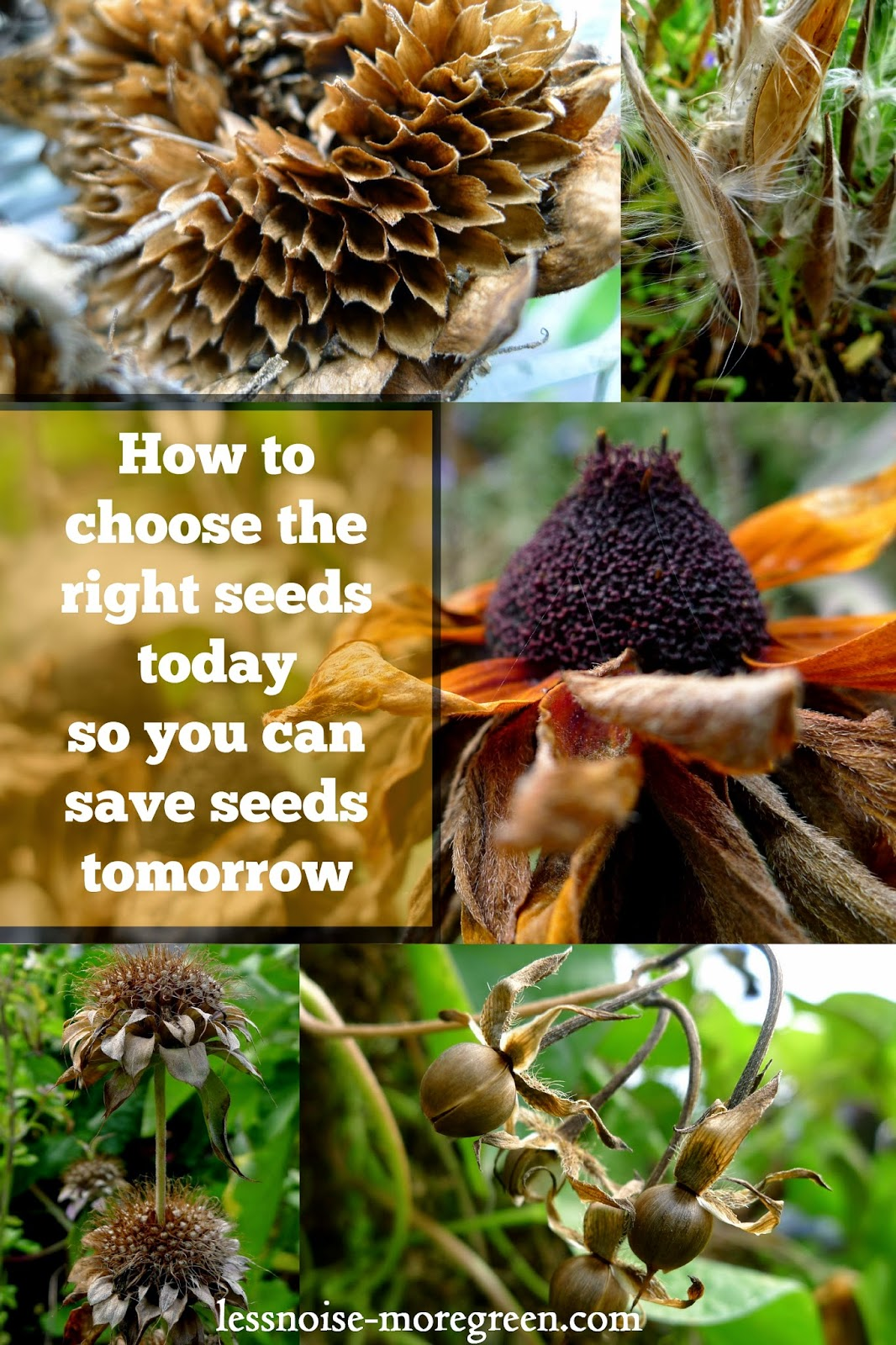 How to choose the right seeds today so you can save seeds tomorrow, open pollinated seeds