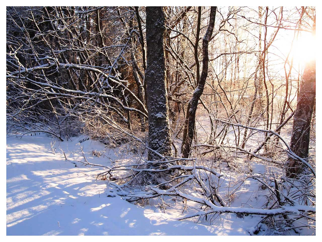 Winter branch1