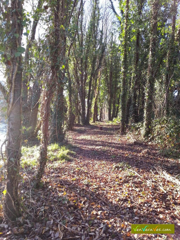 camiño entre árbores na beira do río Miño en Lugo