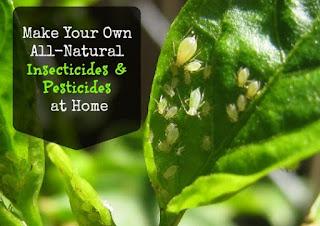 Insektisida Organik Nabati dan Alami: Resep, Pengertian, Cara Pembuatan