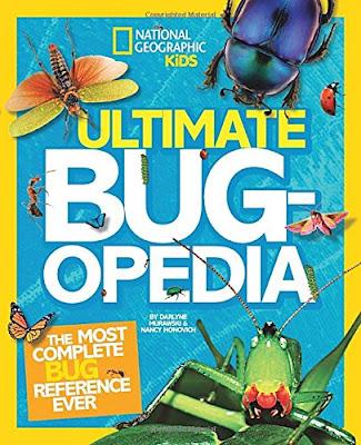 Insect Theme Homeschool Preschool