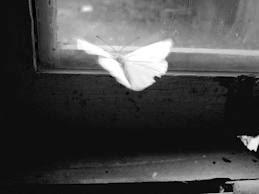 Sentimentul de a fi totul și evidenţa de a nu fi nimic.