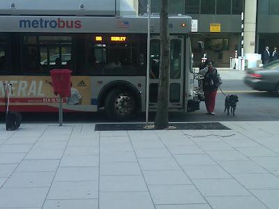 Image Result For Service Dog Vest