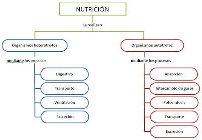 Esquema de Nutrición