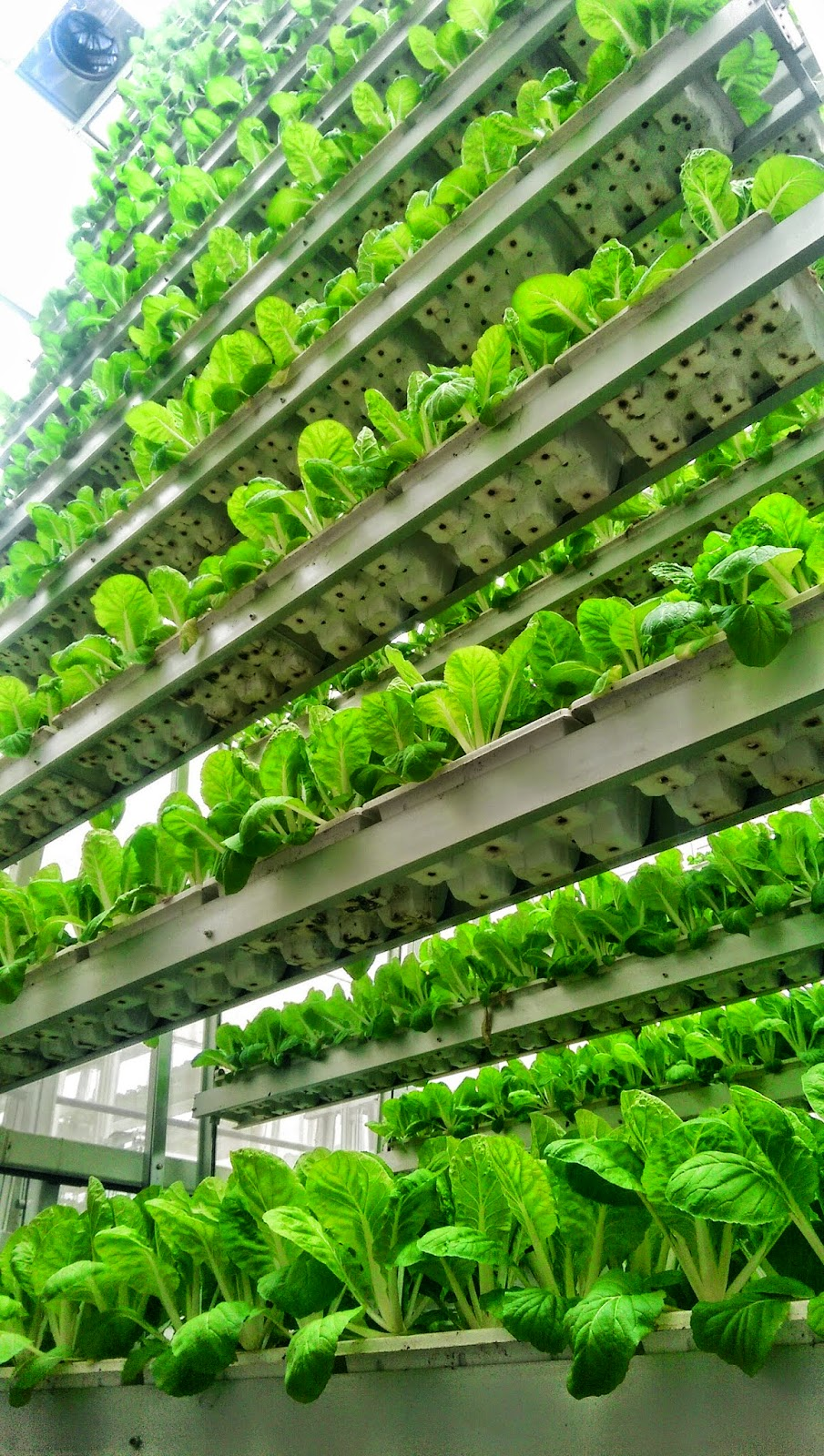 Urban Architecture Now Urban Farming In Singapore