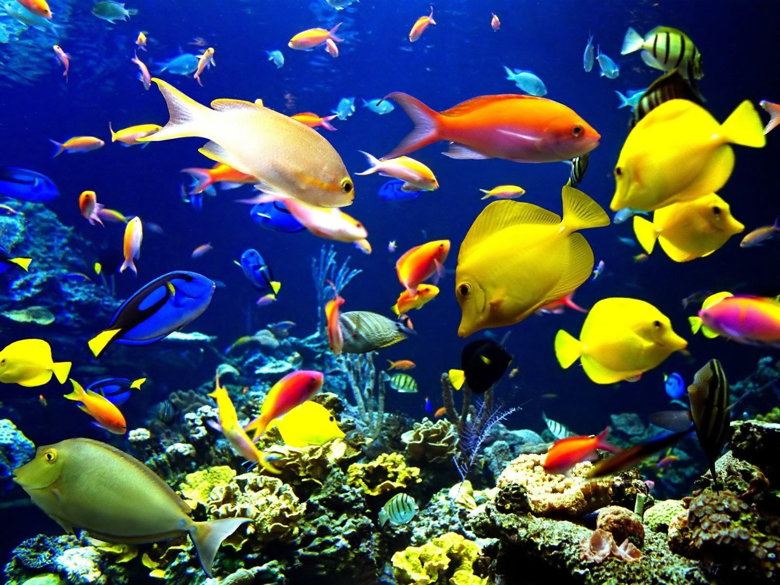 Sea life animals cheeky pictures for Yellow fish tank water