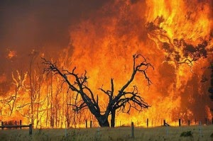 Ringkasan Buku Tentang Bencana Alam Kebakaran