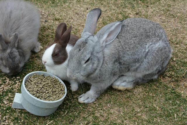 Reindeer Pak Palmer rabbit