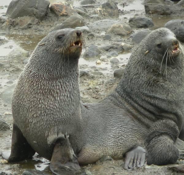 2 headed Seal  10 Headed Animals