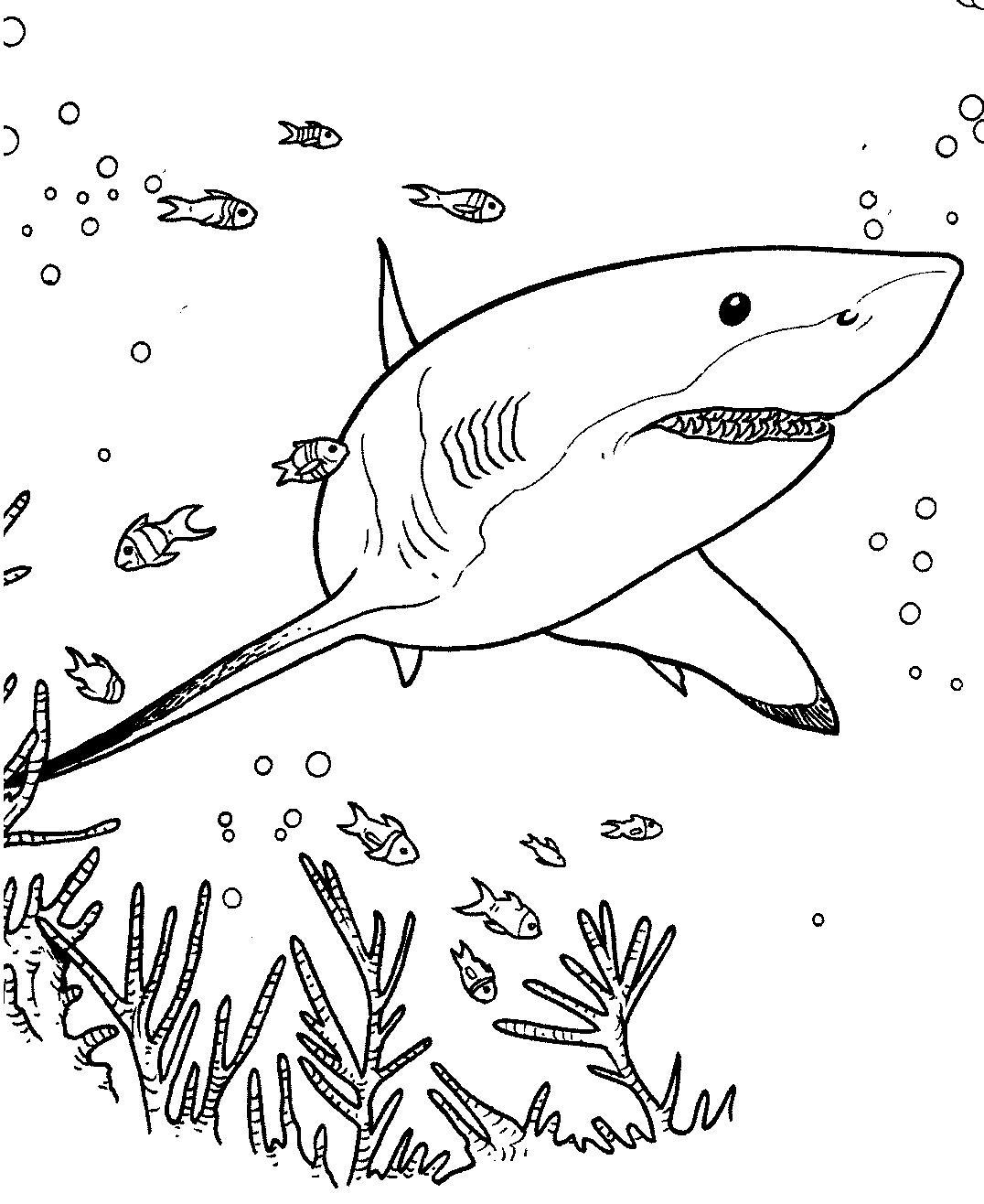 90+ ideas Dibujo De Tiburon Martillo Para Colorear on ...