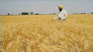 Com as novas tecnologias, a Índia aumentou a produção de alimentos, atende suas necessidades e ainda exporta.