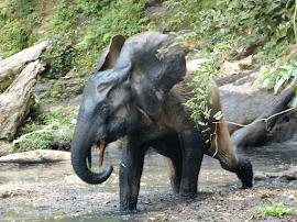 Partez en expédition sur la piste des espèces menacées et encore ignorées