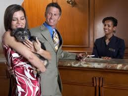 hotéis para cães