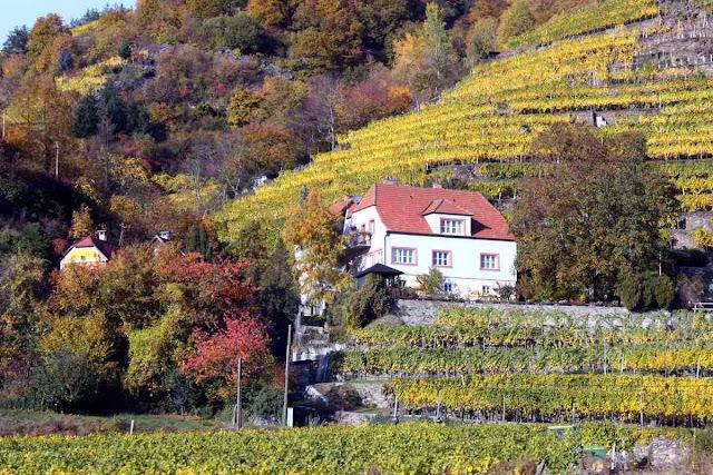 So wohnt man inmitten von herbstlichen Weinbergen © Copyright Monika Fuchs, TravelWorldOnline