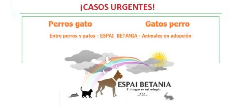 ESPAI BETANIA ¡Casos Urgentes!