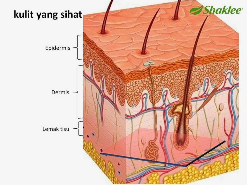 kulit yang sihat