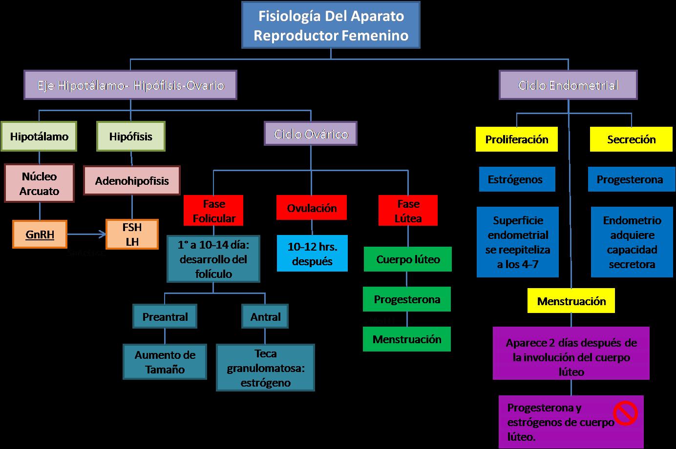 Blog de Ginecología.: Fisiología del aparato reproductor femenino.
