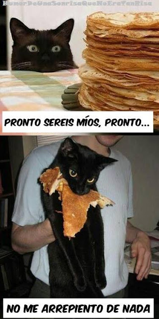 imagen chiste gracioso gatito