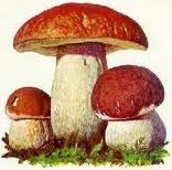 I want to be a good mycologist