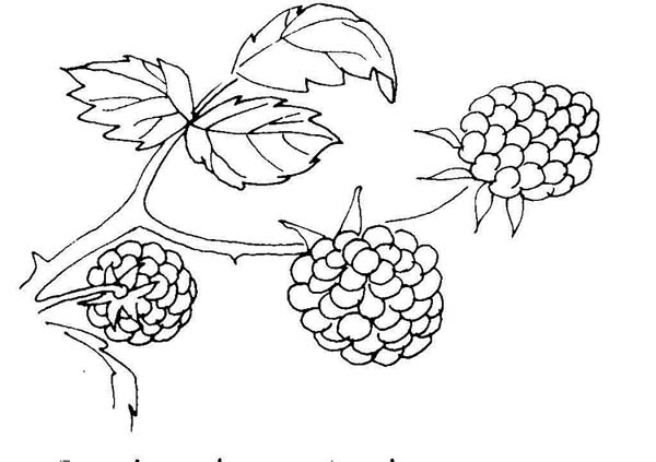 berries berry coloring pages to girls fantasy coloring pages
