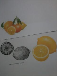 Lukisan atau catan realistik buah-buahan