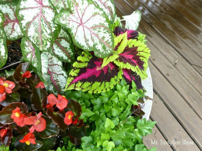 Pretty Container Gardens Made Easy | Ms. Toody Goo Shoes