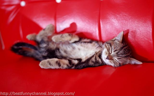 Funny sleeping kitten.