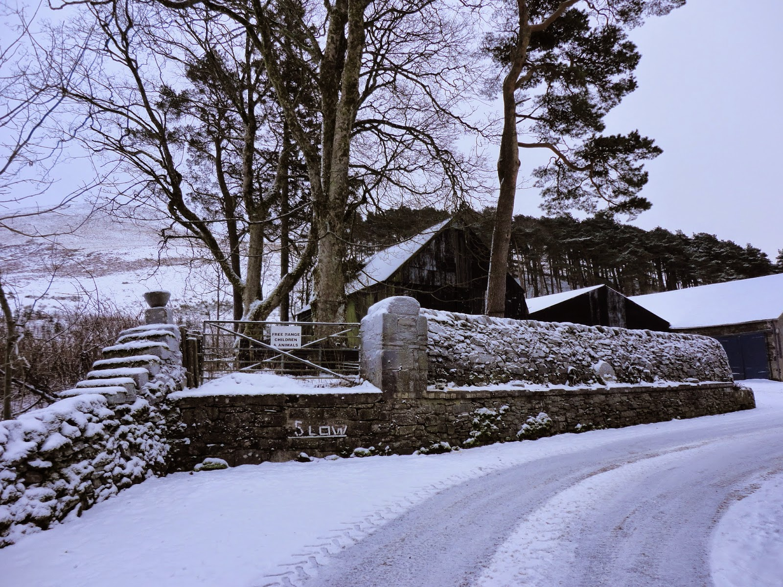 country farm landscape in winter with trees and wall in snow in scotland