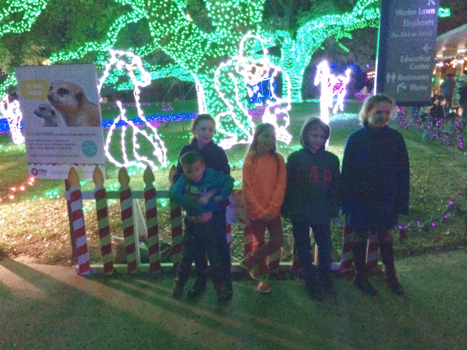 Texas Tigers Houston Zoo Lights
