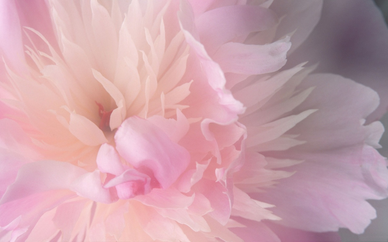 wallpaper pink flowered flower - photo #5