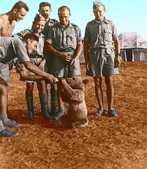 Wojtek as a cub doted upon by Polish soldiers