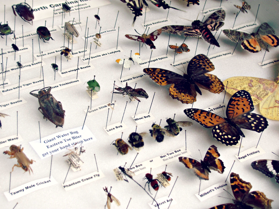 bugfest-2013-small-bug-butterfly-exhibit-raleigh-nc