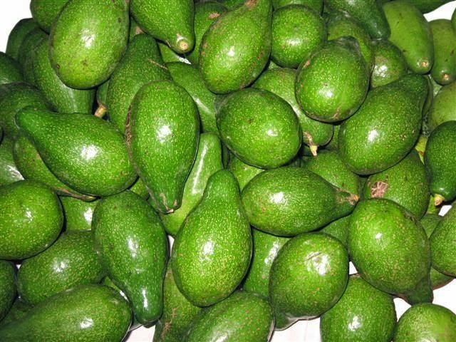 Dak Lak Avocado Fruits (Bơ Dak Lak)1