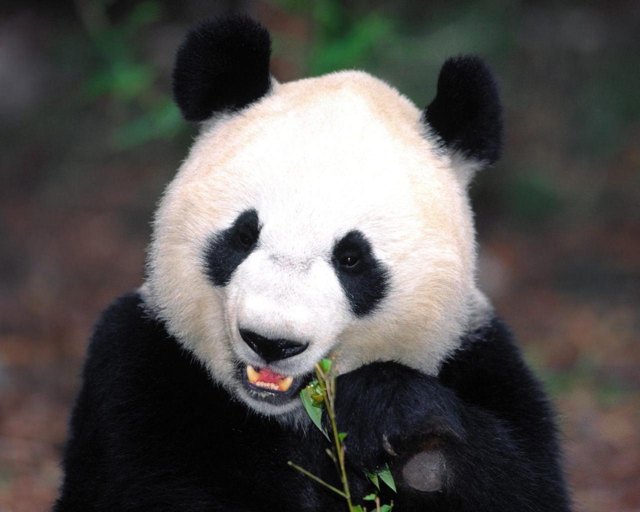 Using Python Pandas for Log Analysis - DZone Big Data