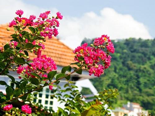 Cho thuê xe đi Tam Đảo thiền viện trúc lâm Tây Thiên 1