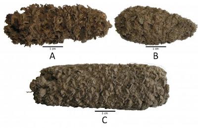 popcorn fossile peru