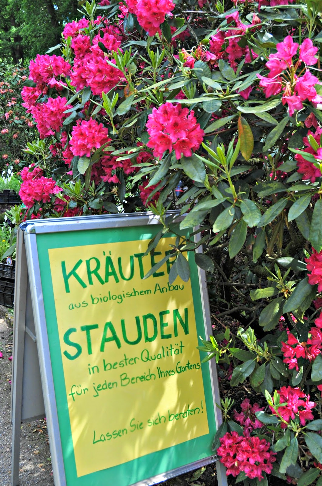 sign at the entrance of the flowers' market advertising herbs of the best quiality